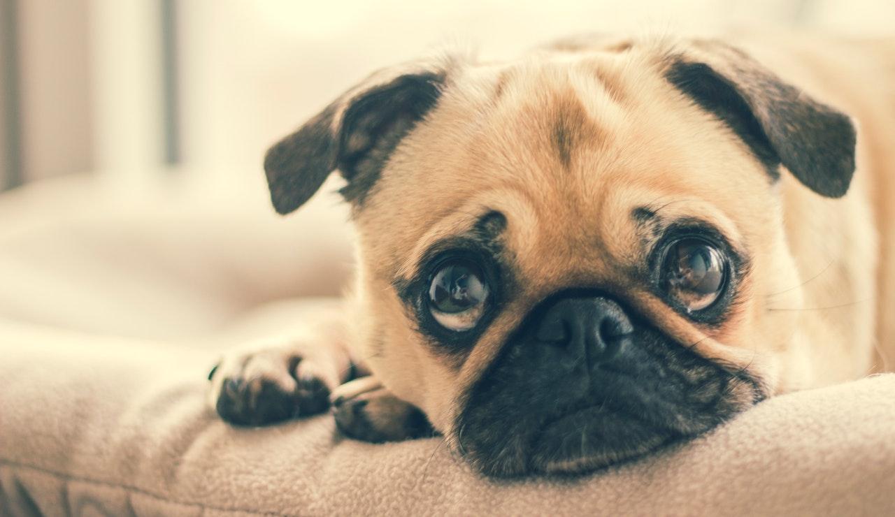honden ontwormen reden