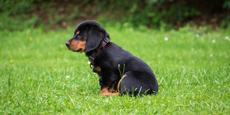 hond zindelijk maken training