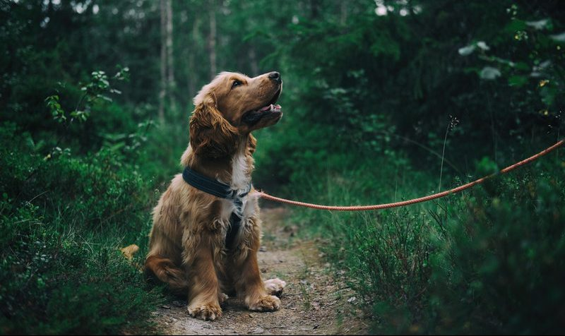 puppy zindelijkheidstraining