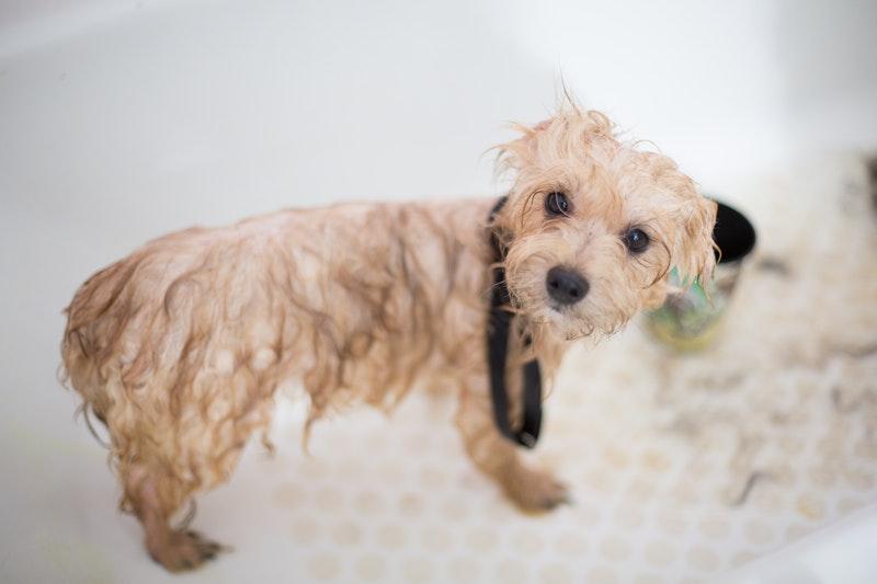 hond wassen stinkt