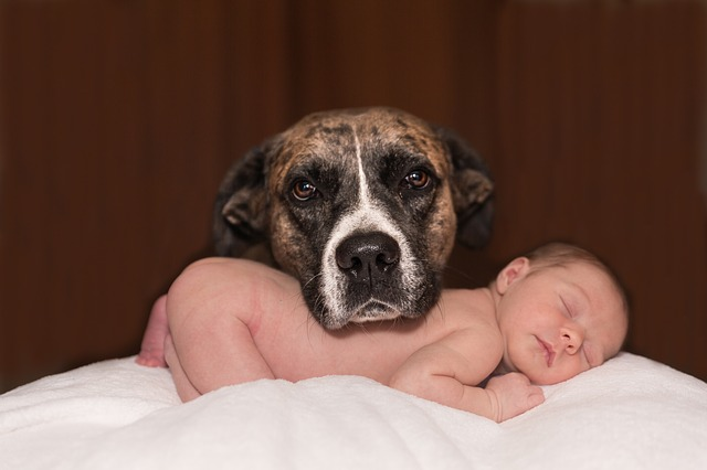 hond baby stressfactor plassen in huis