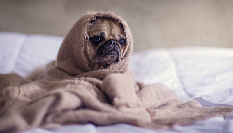 hond depressief gelukkig