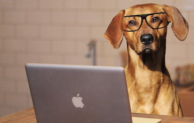 hond op kantoor tips