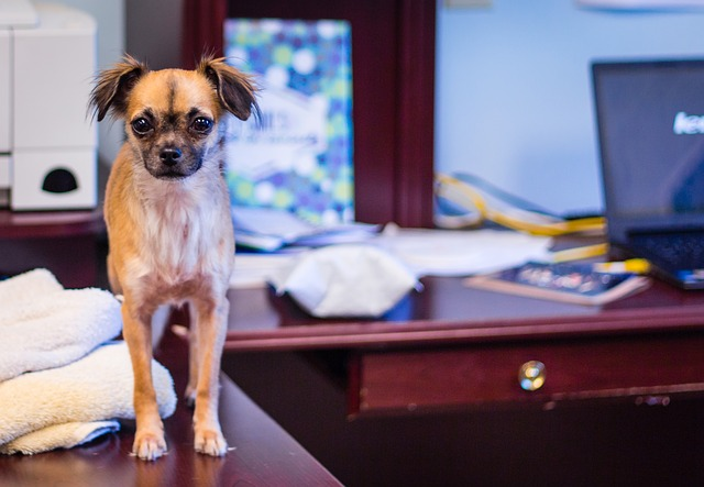 hond op kantoor voordelen