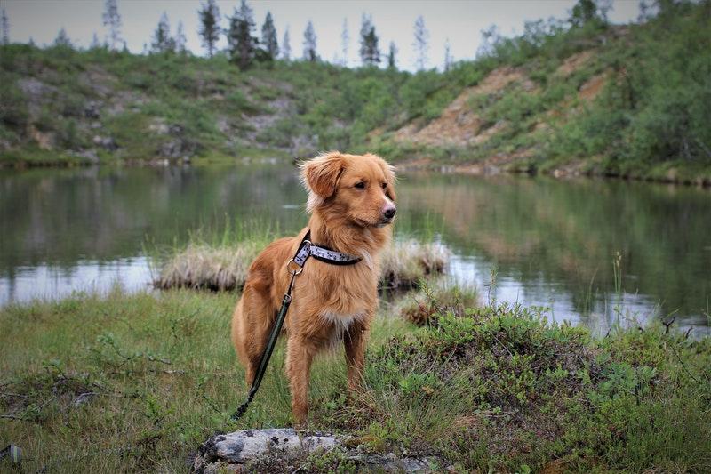 nova scotia hond