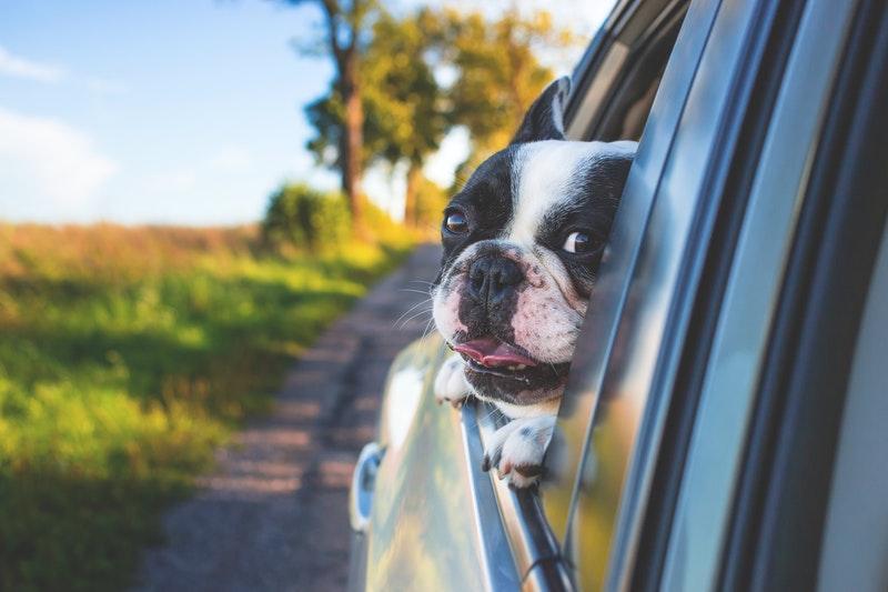 hond mee in auto vakantie