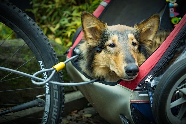 beste hondenfietskar fietskar voor hond