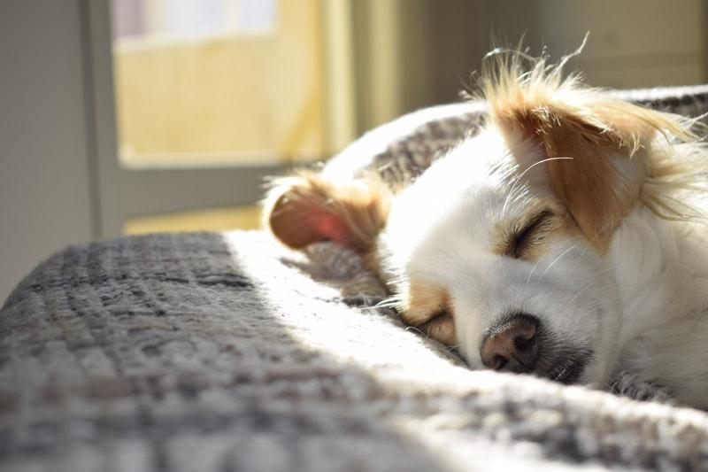 hondensofa hondenbank beste mooie