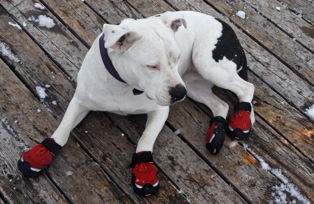 beste hondenschoenen pootbeschermer