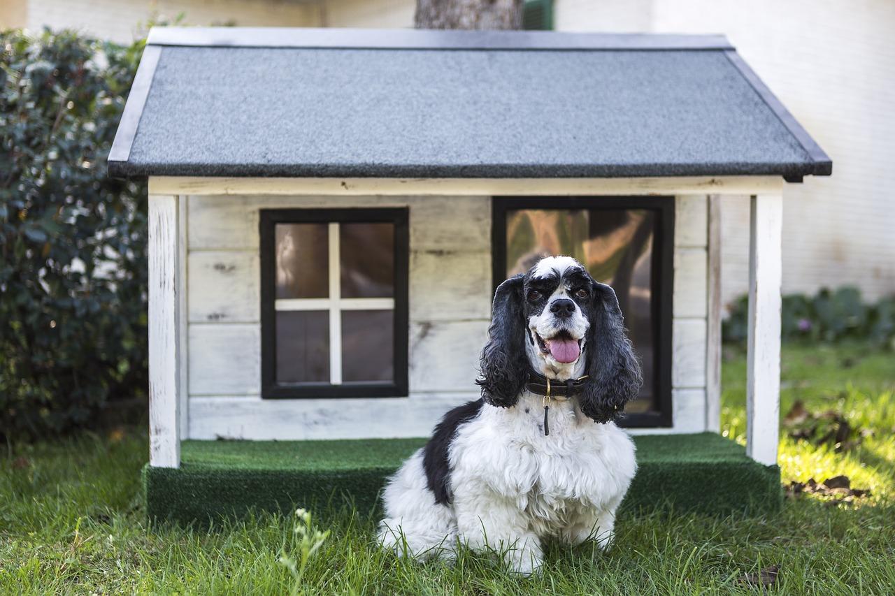 beste hondenhok review