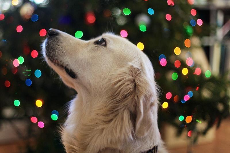 kerst halsband hond