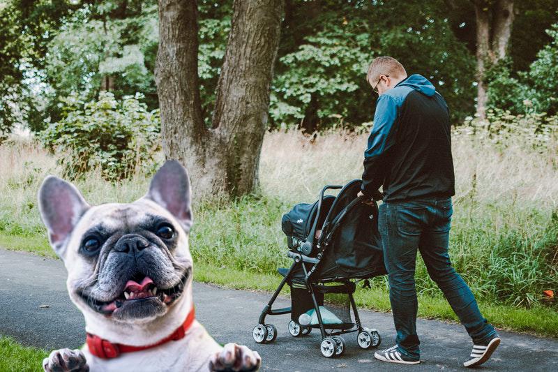 beste honden buggy1