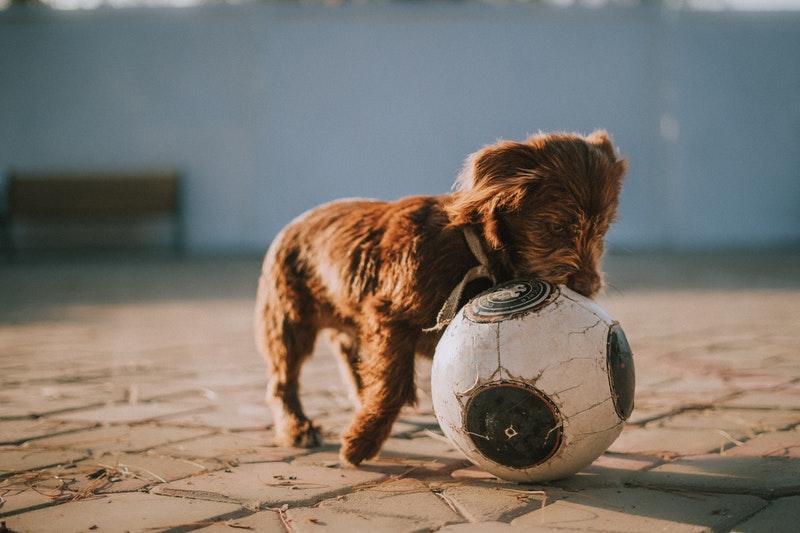 treiball drijfbal hondensport