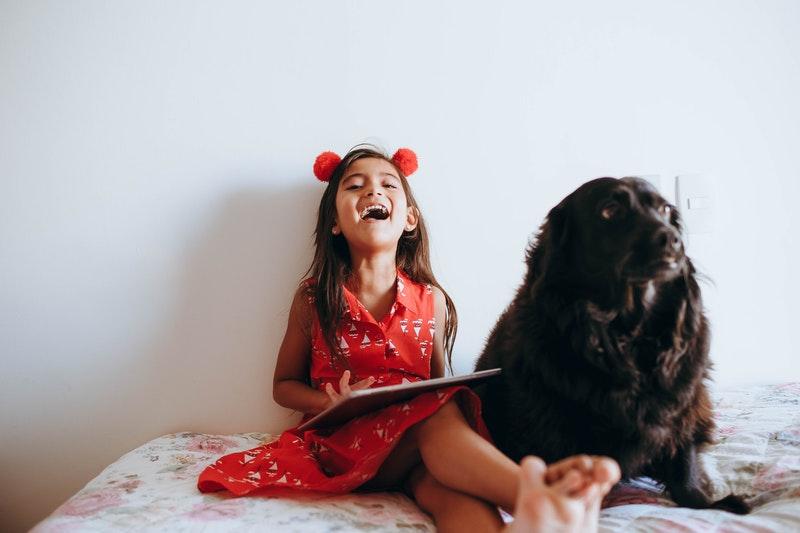 hond bijtincident voorkomen